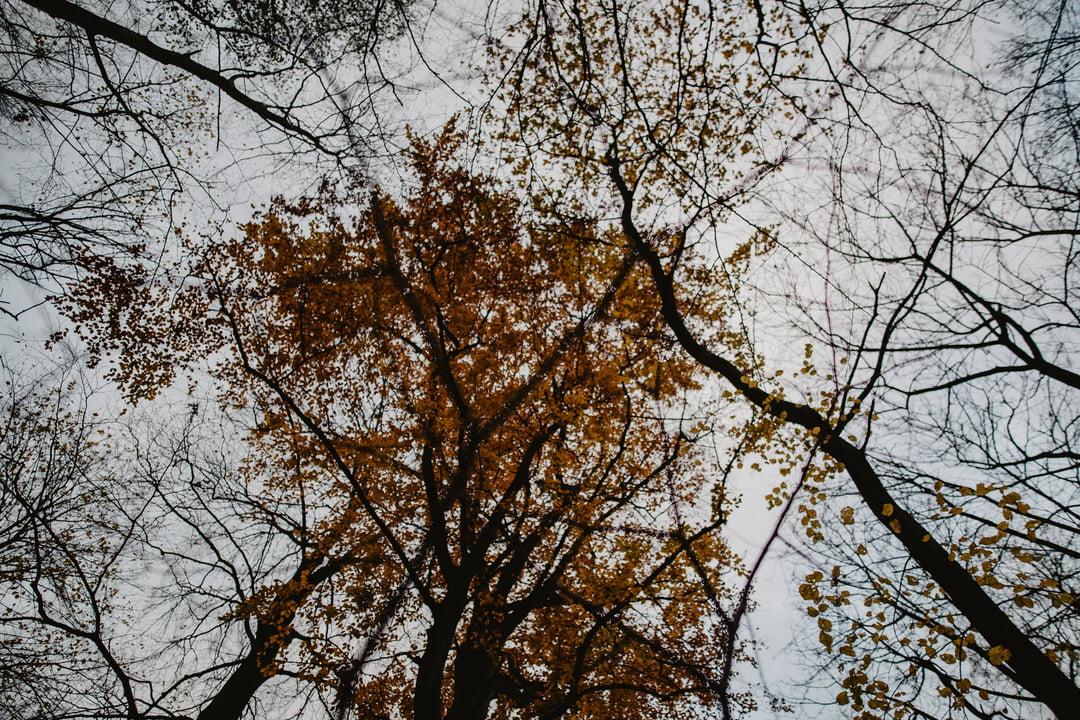 007 fotografia narzeczenska guzow teresin jesienna sesja